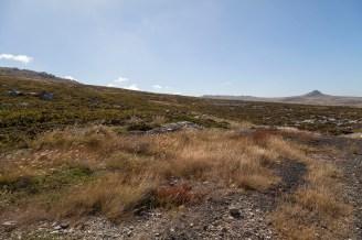 Mount Harriet, Falklands - 08