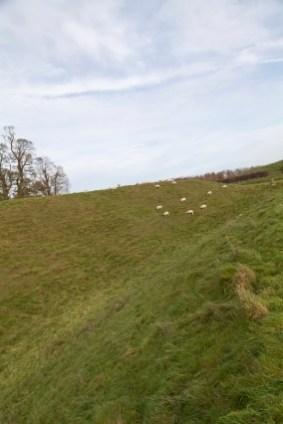 Avebury, Sheep