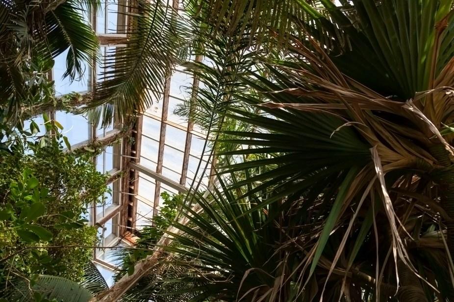 Emmanuel Liais Greenhouse