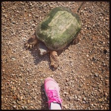 A snapper who crossed my path today. I let him go ahead of me...