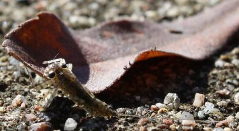 En liten nånting (?) som spolats upp på bryggan. Ca 1cm lång, men svansen var ca 3cm.