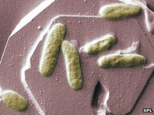 The shewanella bacterium is found in lakes and rivers all over the planet