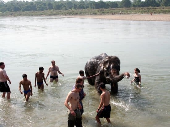 elephant bathing tour