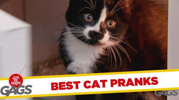 Best Cats Pranks – Best of Just for Laughs Gags