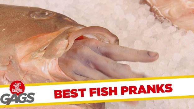 Best Fish Pranks