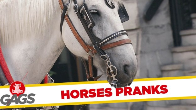 Best Horse Pranks