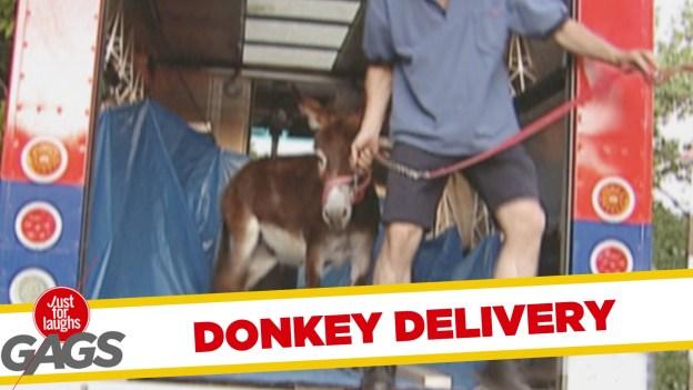 Donkey Delivery Prank