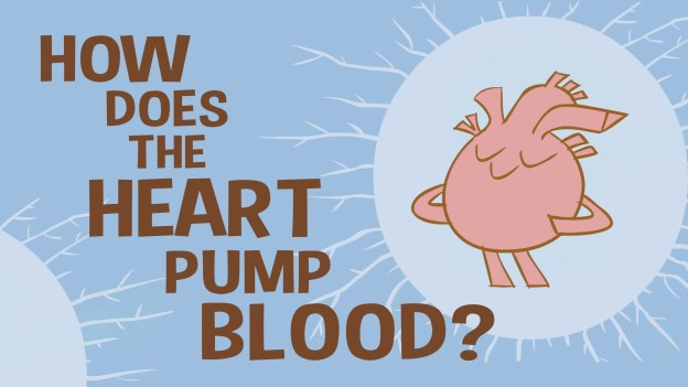 How the heart actually pumps blood