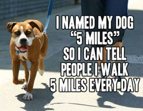 I walk 5 miles every day!