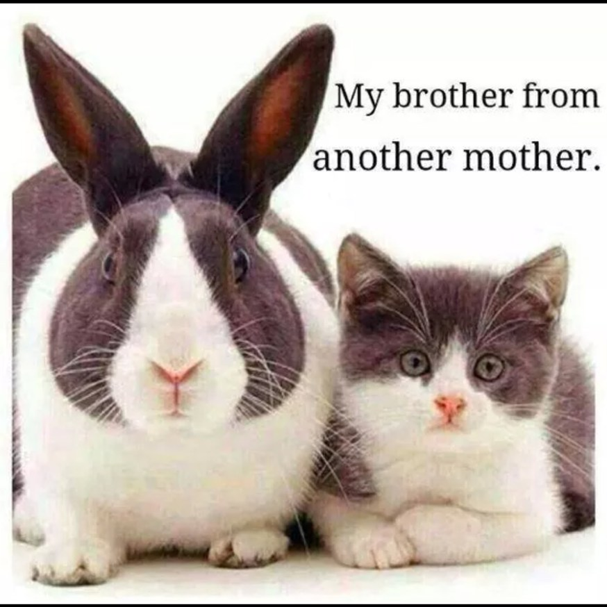 brother-another-mother-cute-rabbit-cat