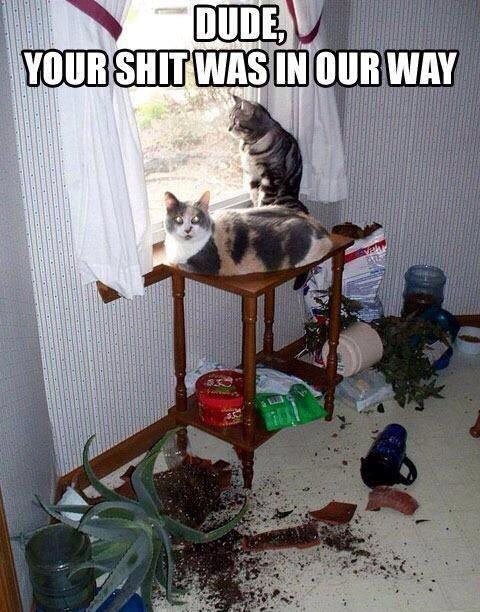 cat-owners-problems