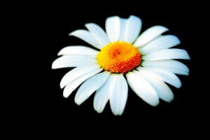 抱きしめる花はデイジー:2004年、佐野元春新レーベル「Daisy Music」誕生!【音楽】