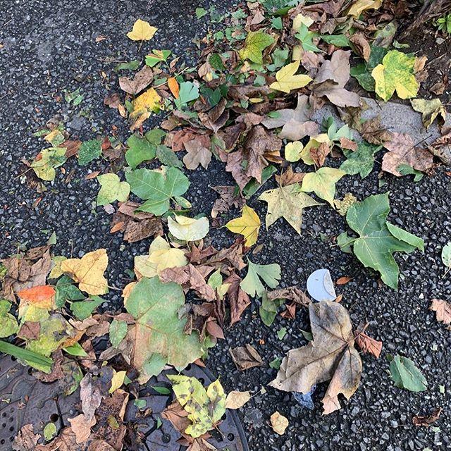 台風で落ち葉が