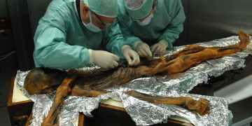 Otzi the ice man ate quite well before being killed 5000 years ago
