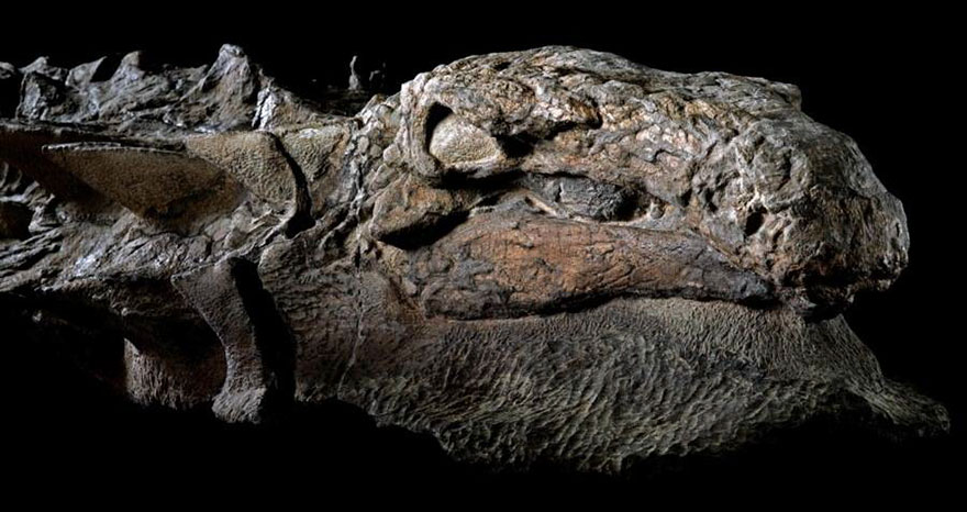 Mummified Dinosaur discovered in Canada that is approximately 110 million years old