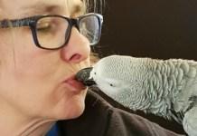 pappagallo che usa Alexa