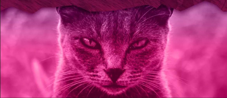 Armakitten - Il GDR di gatti, spionaggio e... coccole - Anteprima Anteprime GdR Giochi da Tavolo Giochi di Ruolo Tutte le Reviews