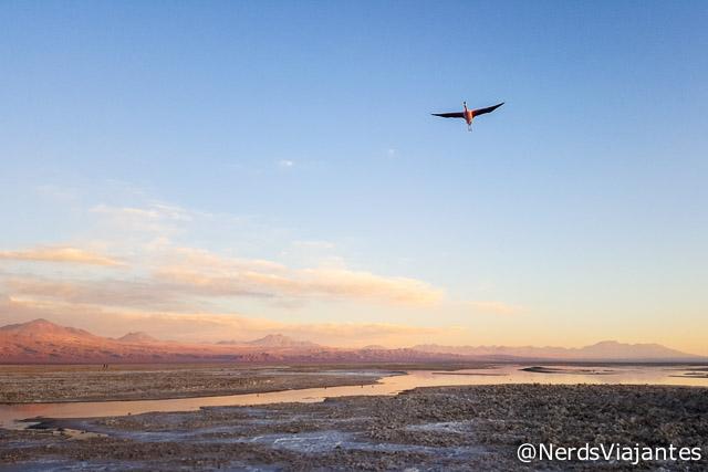Flamingos sobrevoando o Salar do Atacama - Atacama - Chile