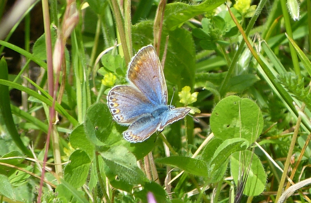 Butterflies in the Meadow | | Nature