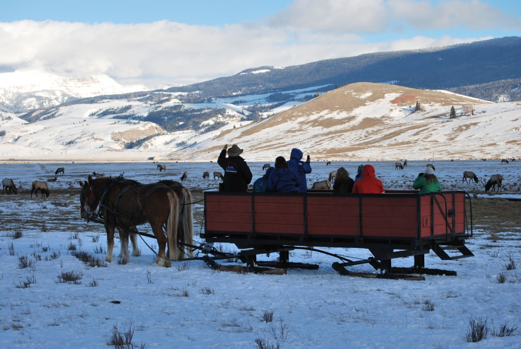 Showing folks the ellk on the National Elk Refuge