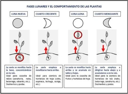 huerto fases lunares