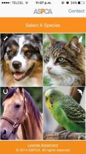 pantalla mascotas aplicacion