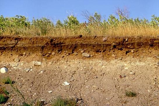 Jenis Tanah Alluvial