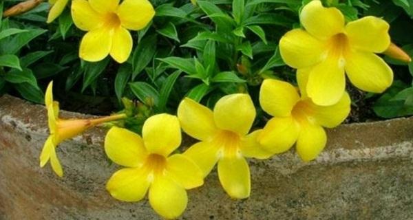 Natural flowers [1945959] </p data-recalc-dims=