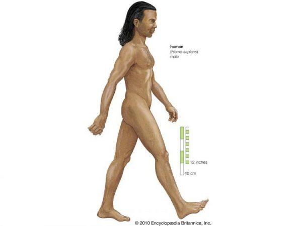 Jenis-Jenis Manusia Purba - Homo Sapiens