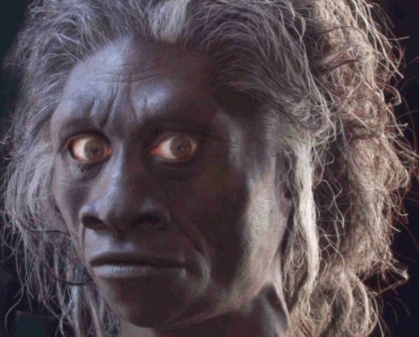 Jenis-Jenis Manusia Purba - Homo Wajakensis
