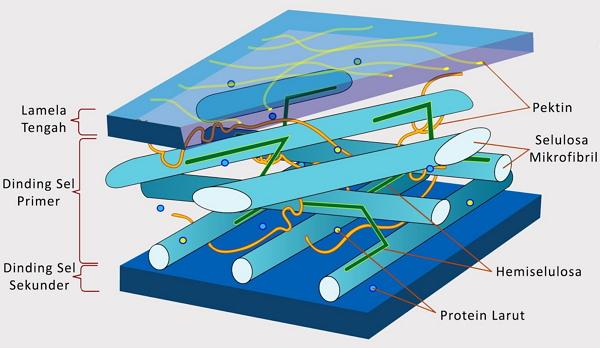 Ciri-ciri Bakteri Terdapat Dinding Sel
