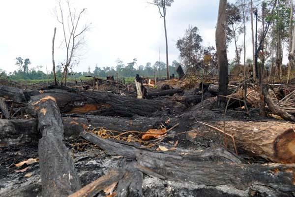 Contoh Teks Editorial tentang Lingkungan