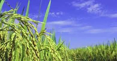 मुख्यमंत्री ने किया कृषि योजनाओं का पुनरीक्षण