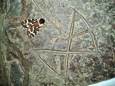 "The ""butterfly"" stone, discovered by Jo, two weeks ago, has an apt visitor."