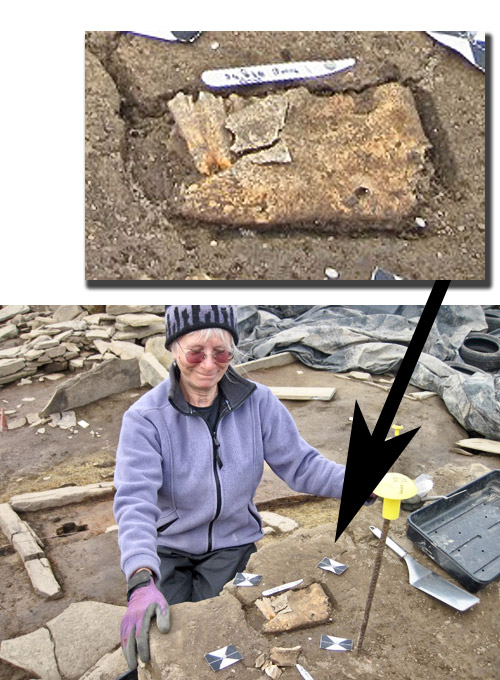 Jenny's beautifully excavated cattle jawbone.