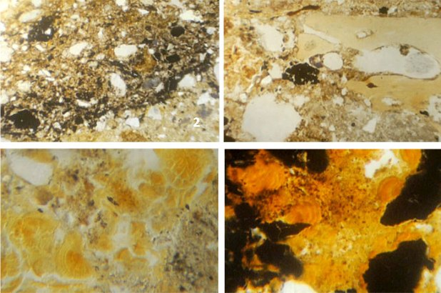 Micro-archaeology in Structure One: Phase 2 shows dense lenses of charred materials; with larger fragments of bone, ash and char seen nearer to the hearth. Below these, 'calcium-iron-phosphate' features, indicative of degraded bone, are seen in both Phases 1 and 2. Image width: upper – 2 mm; lower – 1 mm.