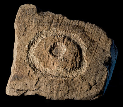The cup-and-ring marked stone from Structure Ten. (Antonia Thomas)