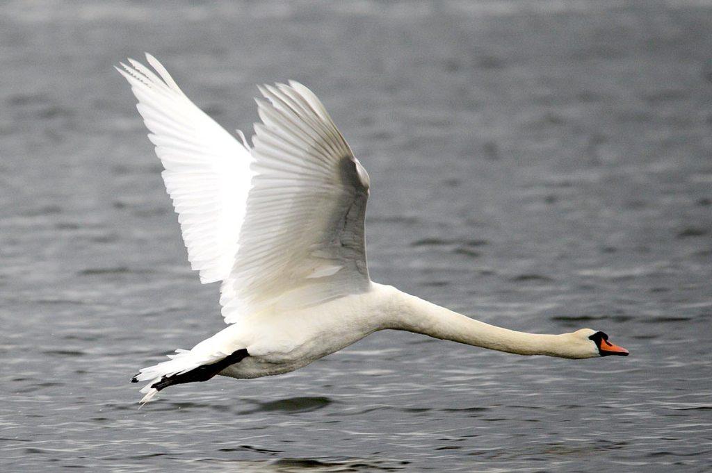 Low flight over the loch