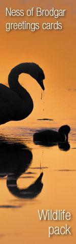 Wildlife Cards. Picture Raymond Besant
