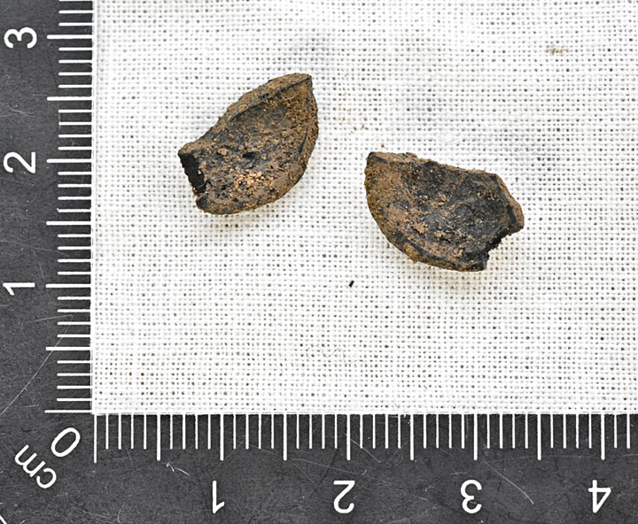 The two charred fragments of hazelnut shell found outside Structure Twelve's southern wall this afternoon. (Ole Thoenies)