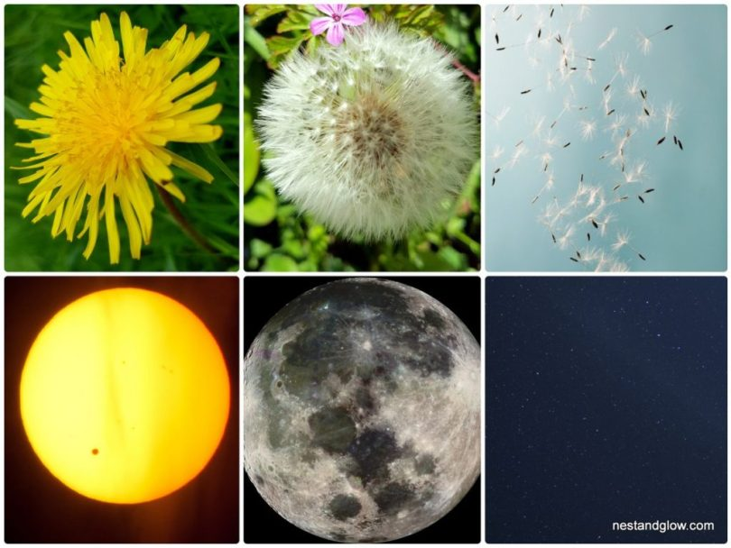 dandelion respresents the sun moon and stars