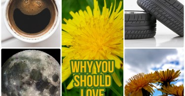 Why You Should Love Dandelions