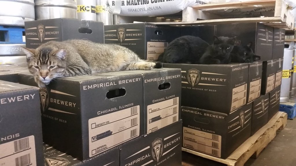 cats working in brewery