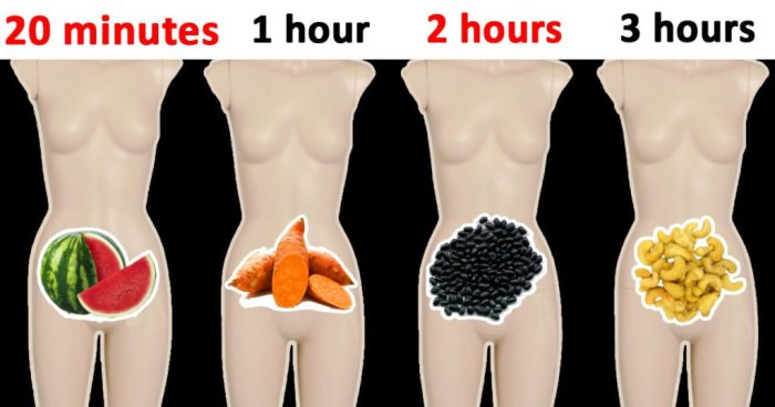 food digestion times