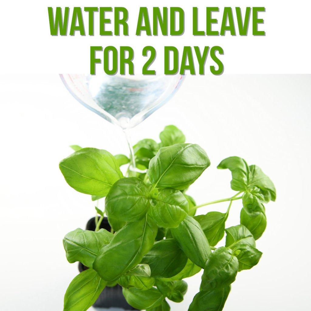 keep supermarket herbs alive