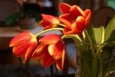 nws_tulips