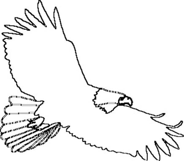 Bald Eagle Outline Coloring Page NetArt