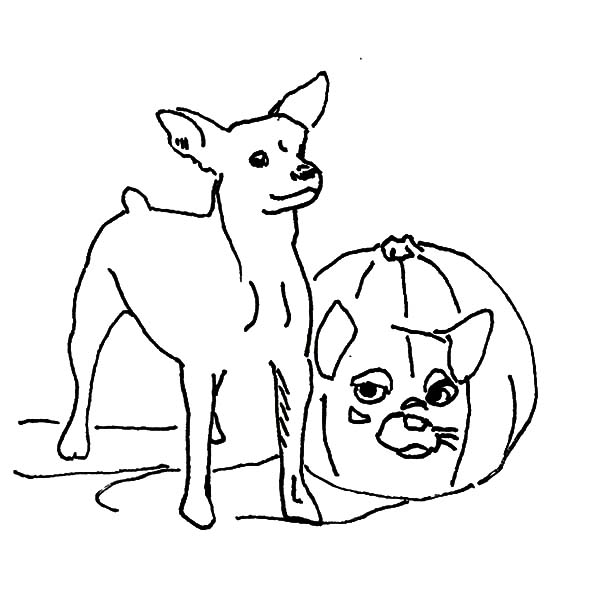 Outline Chihuahua Draw