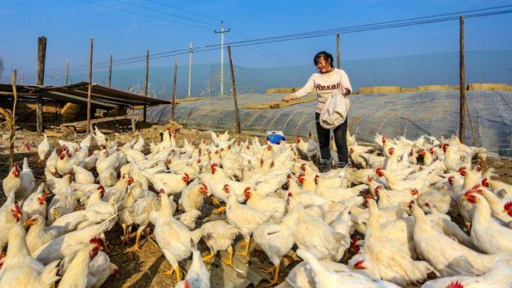 Primer caso de influenza aviar H10N3 detectado en humanos