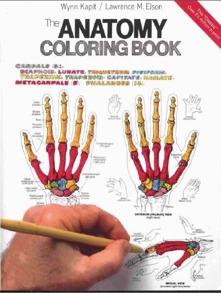Atlas De Anatomia Para Colorir